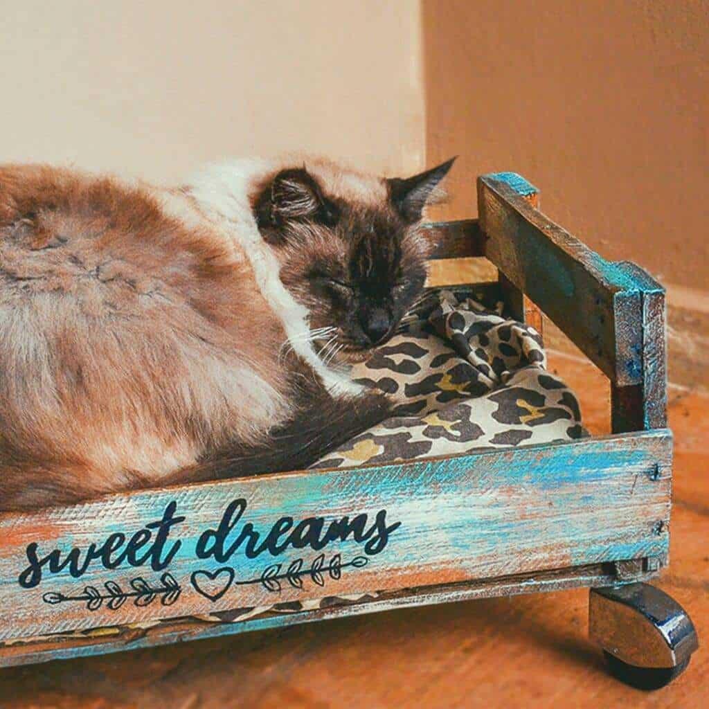 caixote para cama de gato decorado