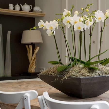 Arranjo delicado com várias orquídeas na decoração
