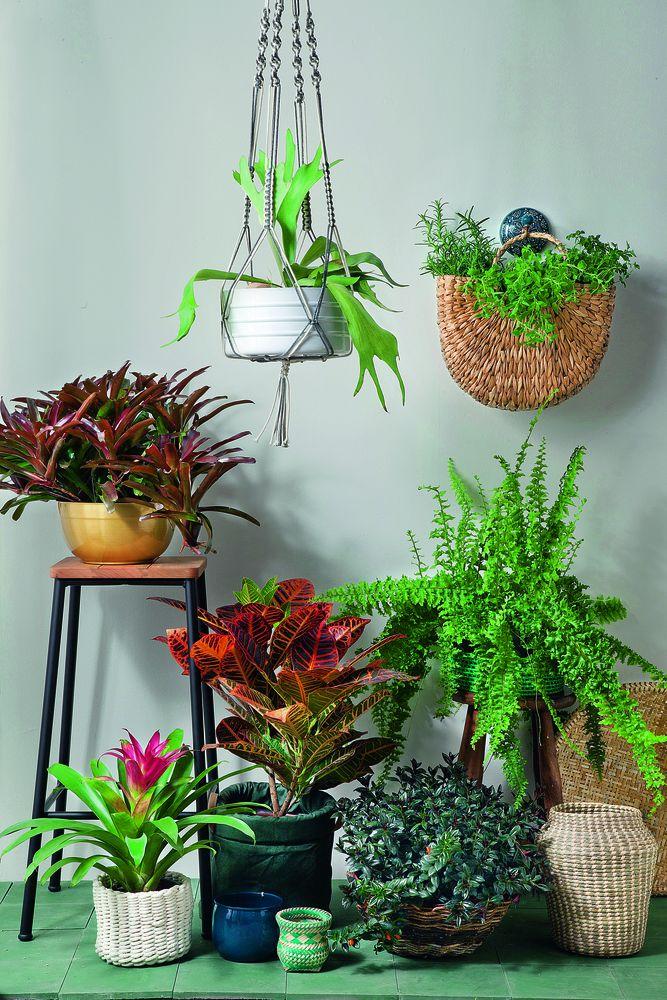 dicas para ter plantas em casa