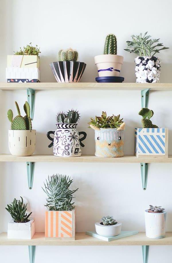 vasos coloridos com suculentas e cactos