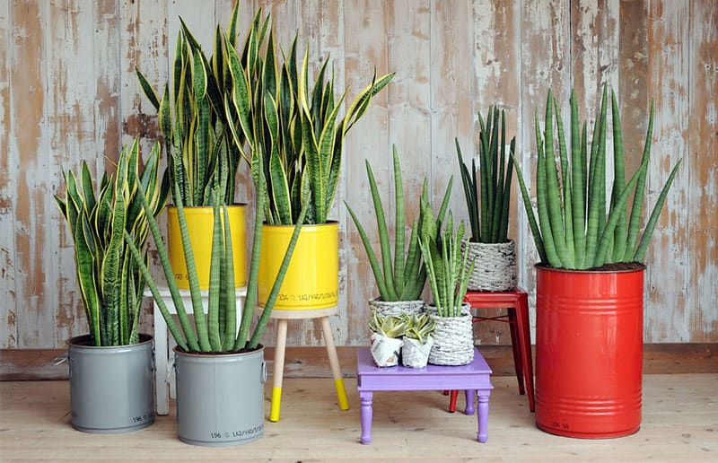 ideias para plantas em casa
